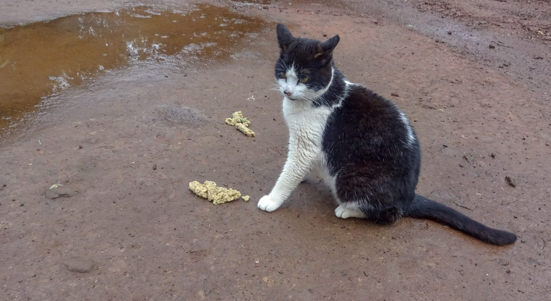 Кошка в парке