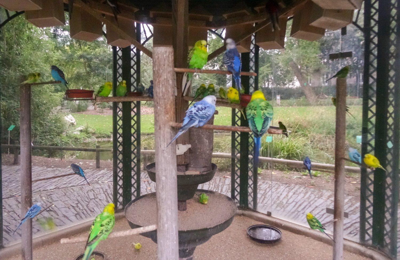 Птички живые