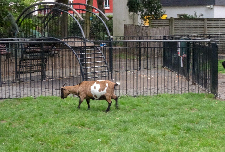 Такое ощущение, что коза в коровьей шкурке