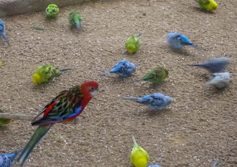 Попугайчики на туристов особо внимания не обращают