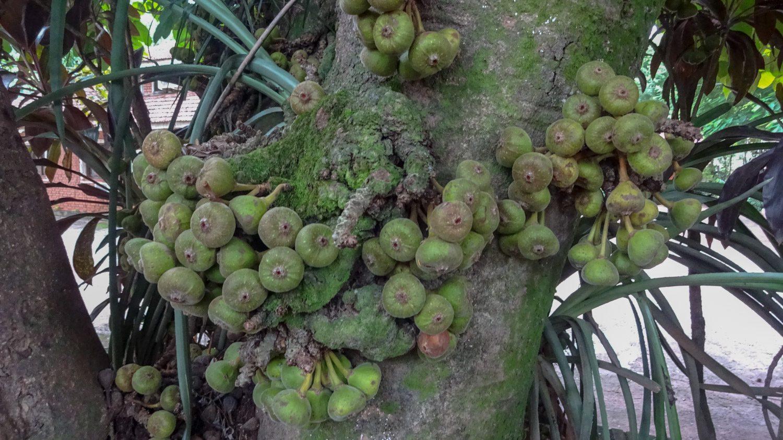Что-то странное на дереве выросло