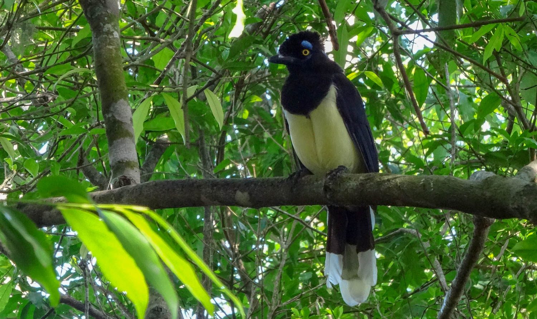 Чудесные тропические птички