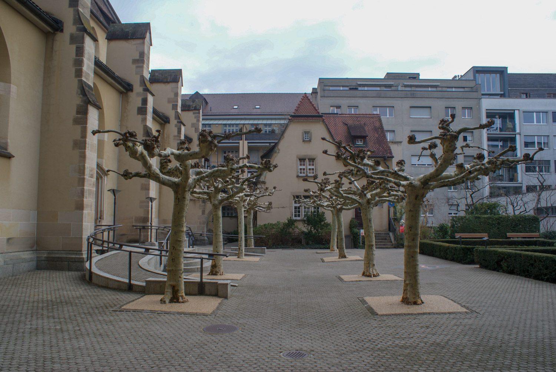Деревья рядом тоже необычные