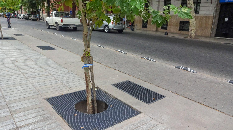 Заботятся не только о людях, но и о деревьях
