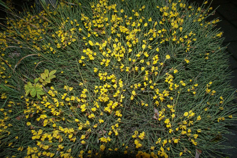 В октябре здесь еще можно найти цветочки