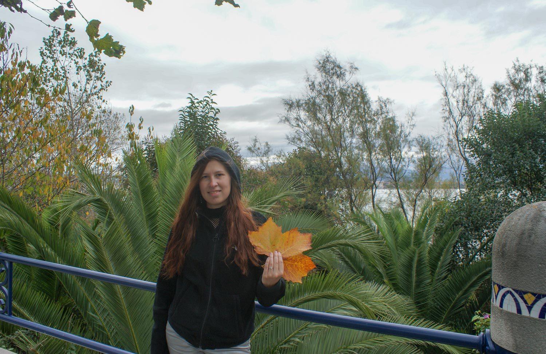 Нашла огромный кленовый лист. Еще не красный, но все равно красивый