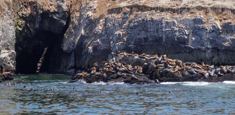 Уже отсюда отлично слышны крики морских львов. И чувствуется, как они пахнут!