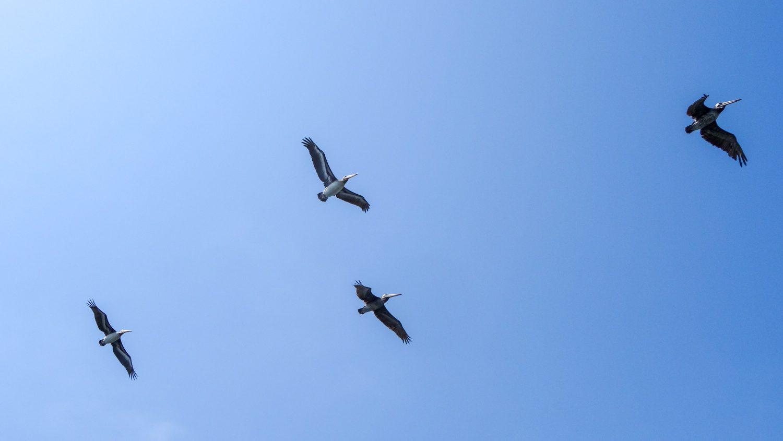 Прекрасных птиц мы посмотрели сначала в воздухе