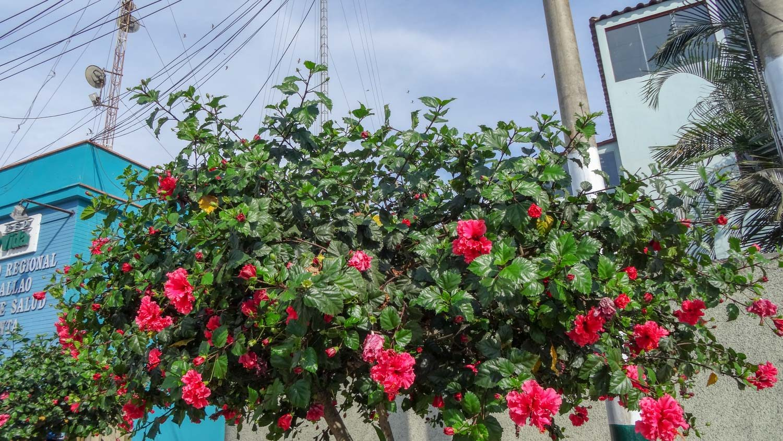 Цветочками украсили...