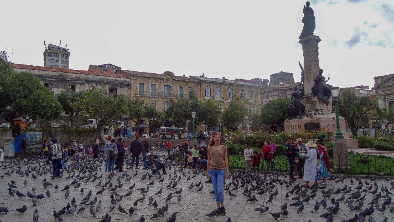На площади много-много голубей