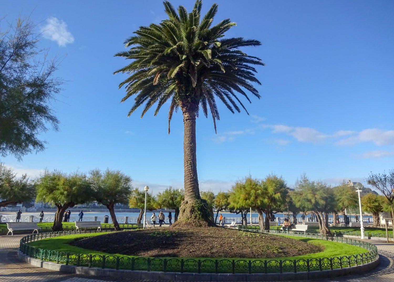 Главная пальма в парке