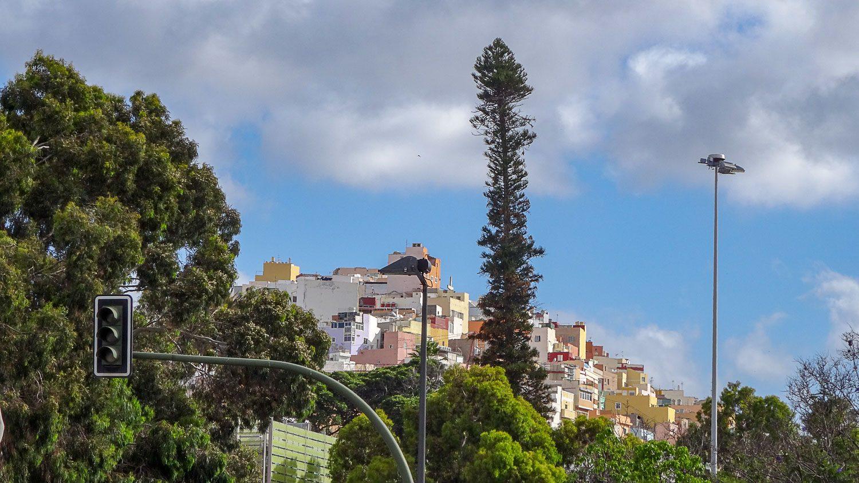 Холм и огромное дерево