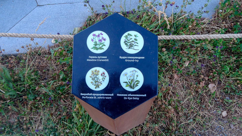 Информация о растениях. Мило!