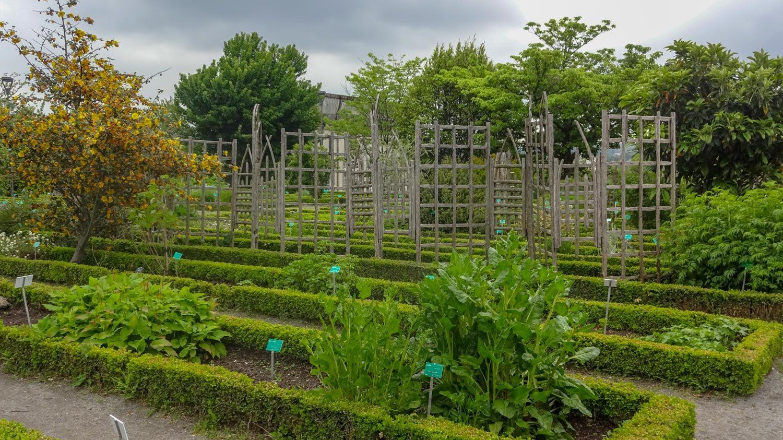 И ботанический сад. Мы уже и не ждем увидеть людей