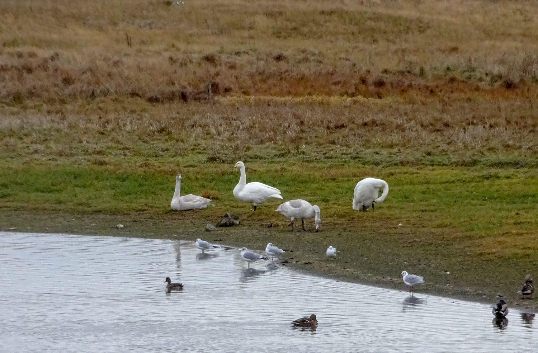 Чудесное озеро, по берегу которого ходят птички