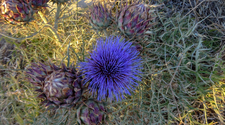 По пути - разнообразные растения