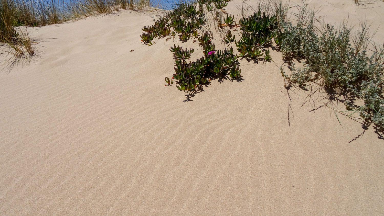 Песочек вокруг