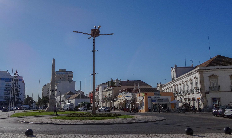 Прямо в центре города аист свил гнездо