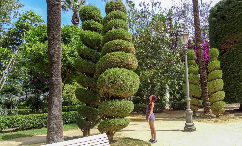 Спиральные деревья