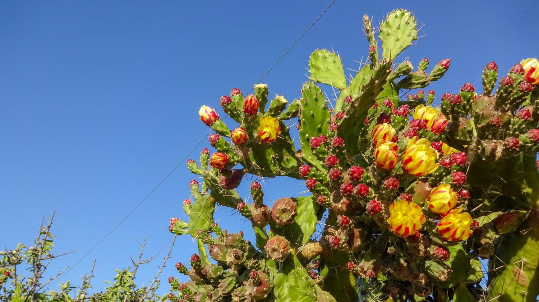 В том числе гигантские кактусы