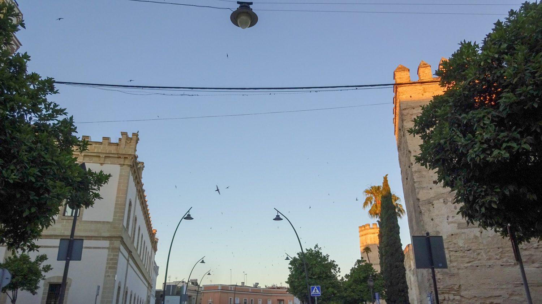 По утрам кричат птицы