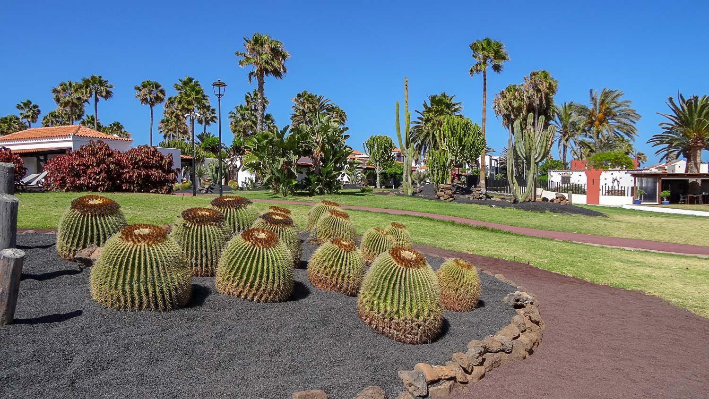 Парк с кактусами