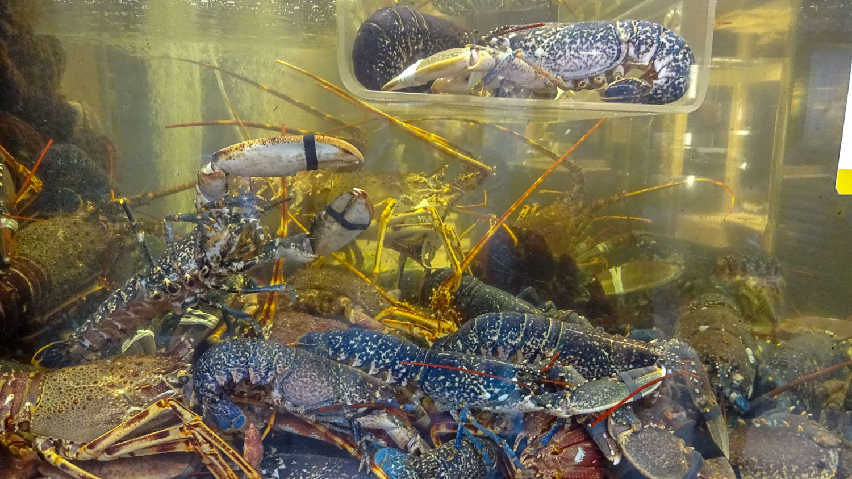 Здесь очень многие рестораны выставляют в витринах аквариумы с будущим ужином