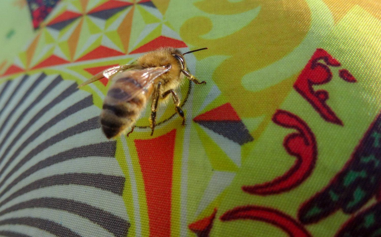 Обычно я фотографирую уточек, а тут - насекомое