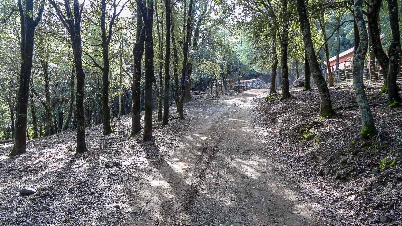 Тропинка ведет в лес