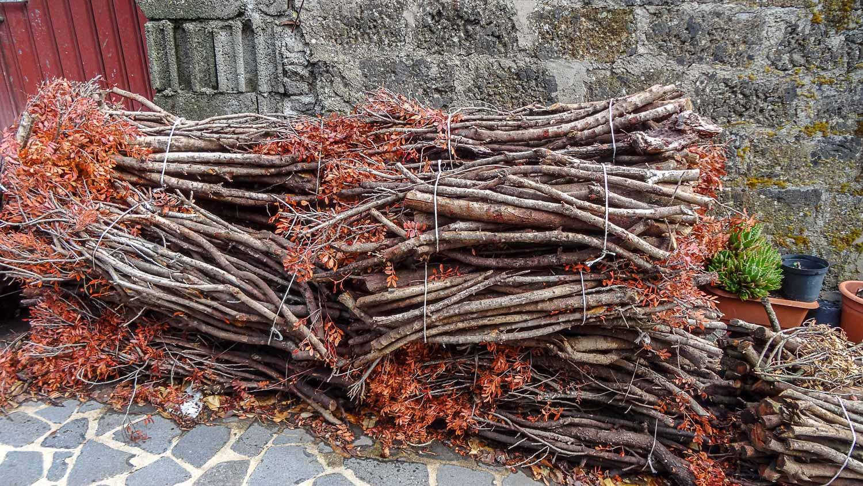 Кажется, здесь до сих пор запасают дрова...