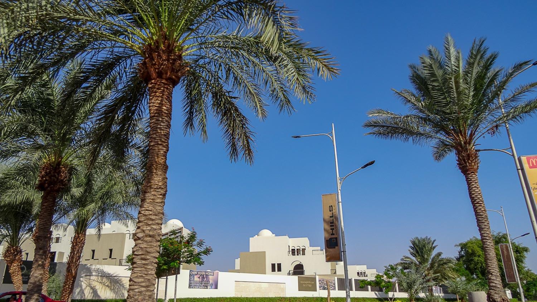 Еще пальмы