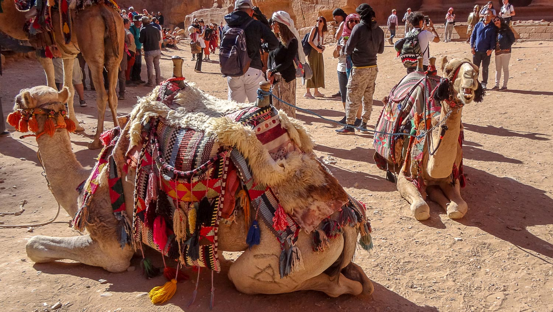 Верблюды...