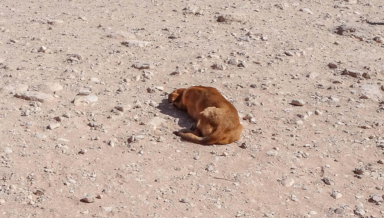А собачка отдыхает прямо на солнышке
