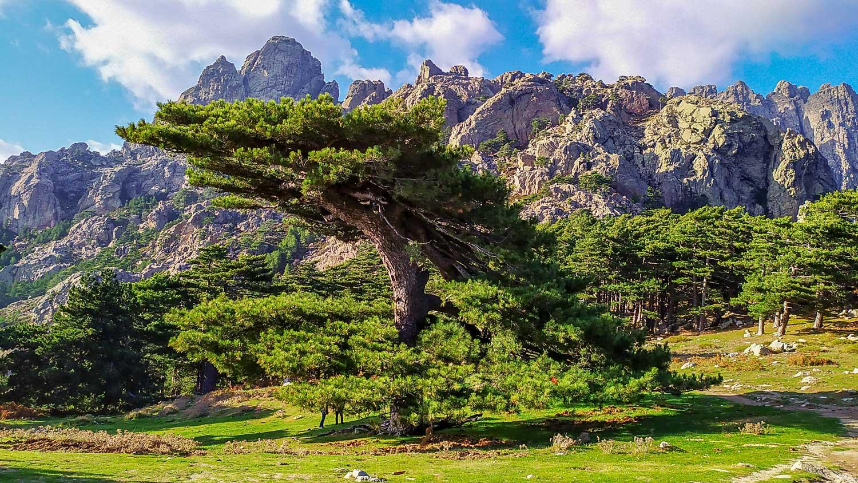 И хвойные деревья необычной формы