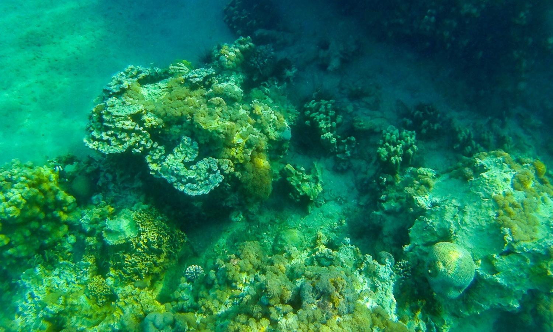 Симпатичный риф