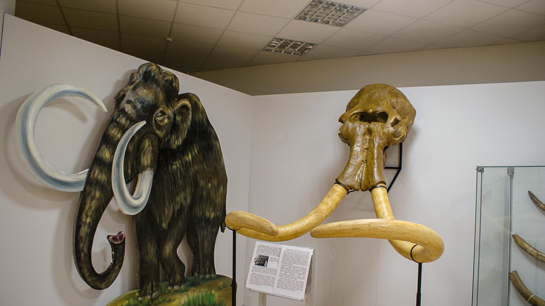 Череп мамонта
