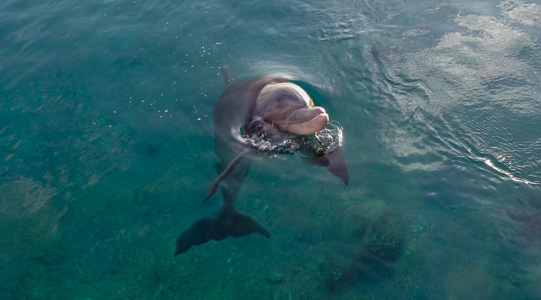 Дельфин!