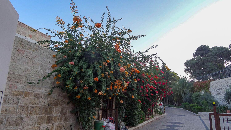 Зелень и цветы