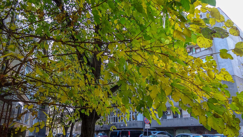 Обожаю такой цвет листвы!
