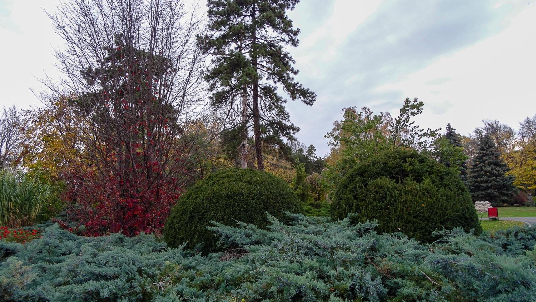 Разнообразие растительности в парке