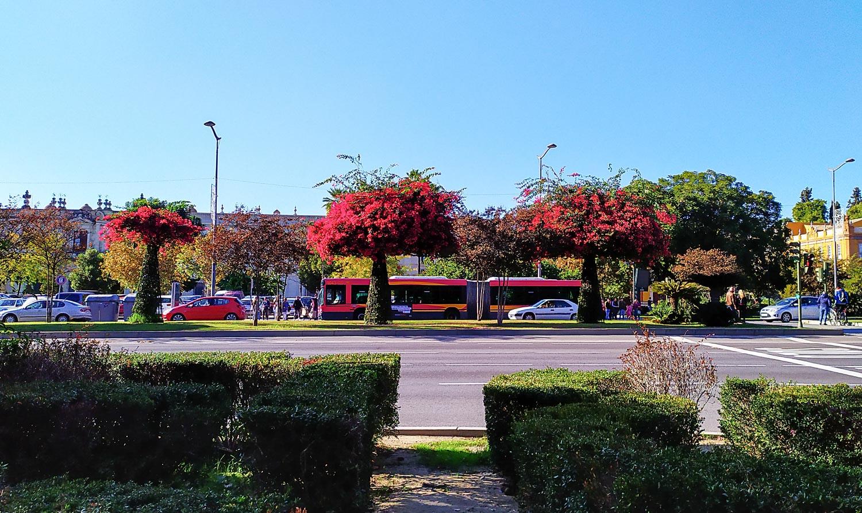 Ярко-малиновые деревья