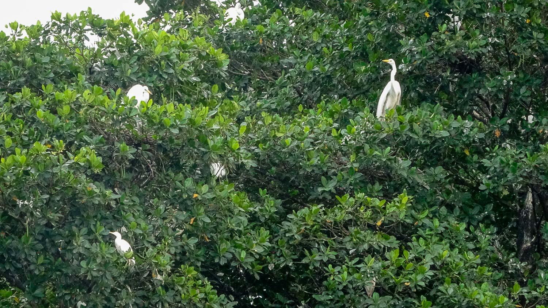 Много-много белых птиц