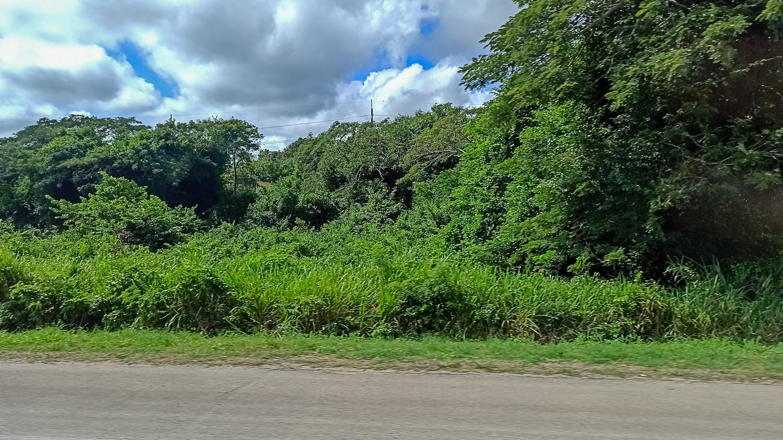 Вот такая яркая зелень по пути из Монтего-Бей в Очо-Риос