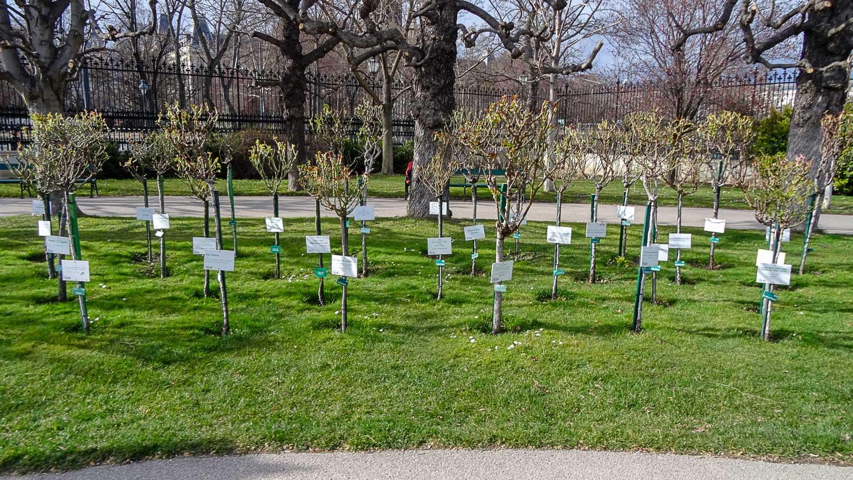 Таблички на деревьях
