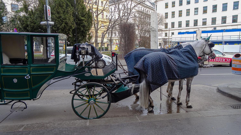 Главный туристический транспорт Вены