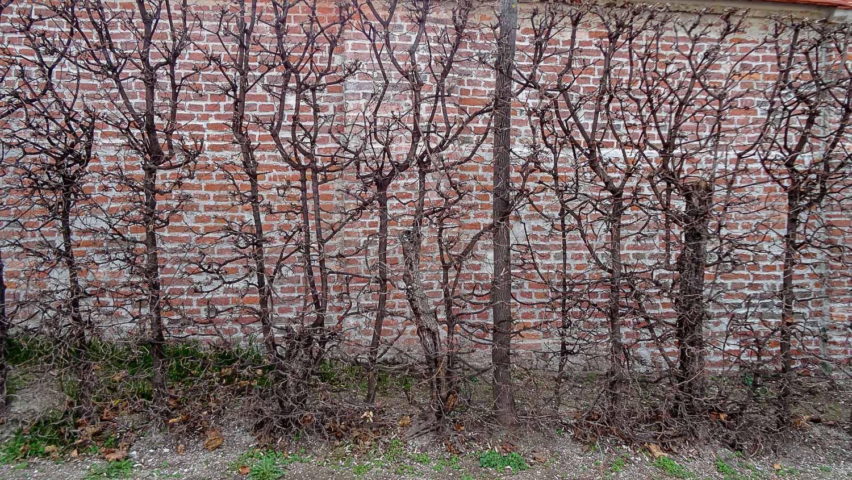 Стену оккупировали растения