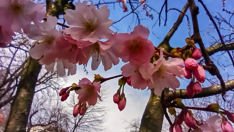 Очень люблю эти цветы