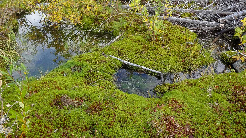 И северная растительность
