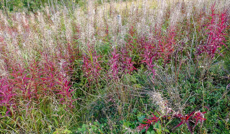 Местные травы