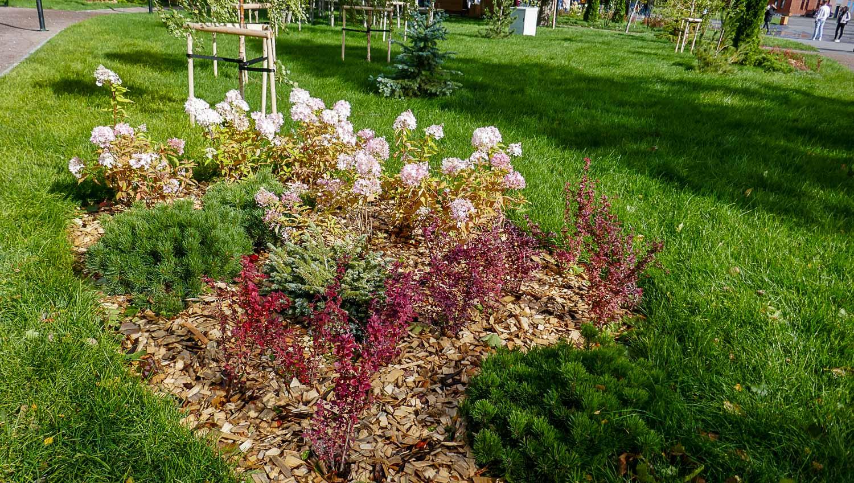 Цветы и деревья - явно недавно посажены
